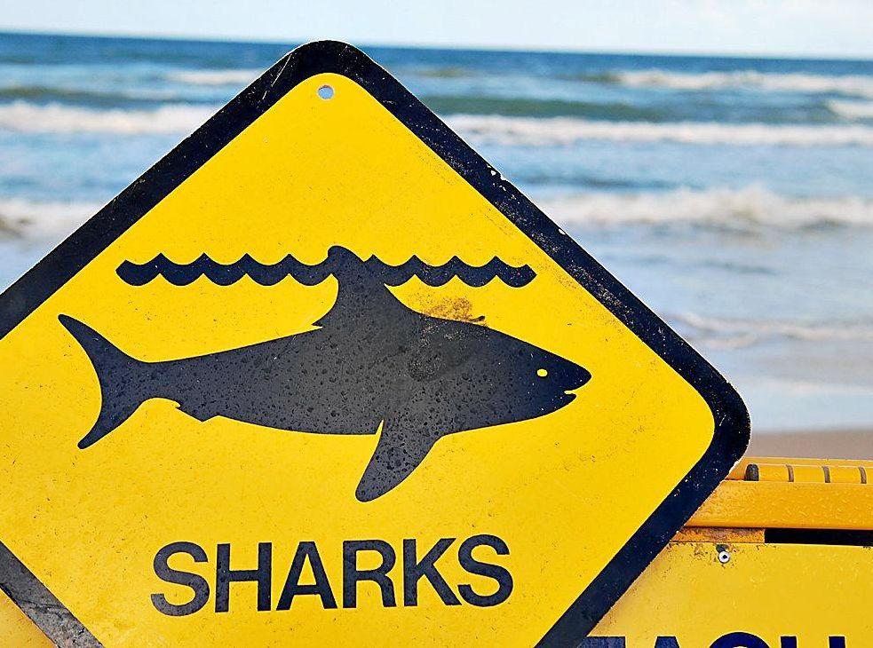 Sharks warning sign.