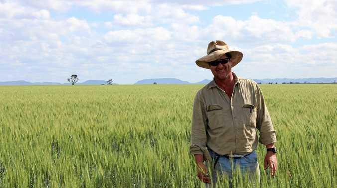 GOOD SEASONS: Farmer Shane Eden with his wheat crop.