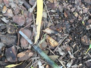 Syringe found by three-year-old in Cannonvale park