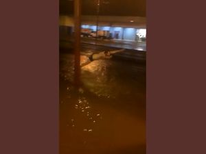 Residents go swimming in Roma floodwaters on Saturday night