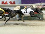 Lawyers sink teeth into Baird's greyhound ban