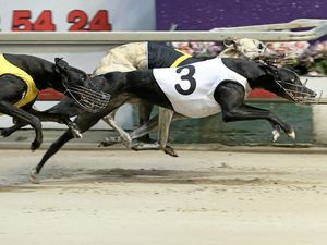 Lawyers sink teeth into Baird's greyhound ban