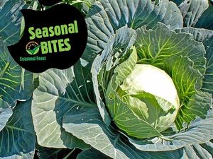 Cabbage and baby broccoli make a perfect pair