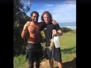 VIDEO: Backpackers rescue baby dolphin at Yamba