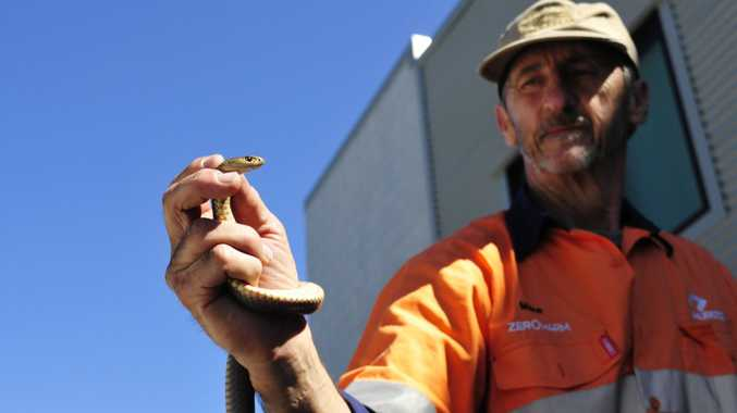 GLADSTONE'S snake catcher Mike Boen had only one word to describe this year's snake season: weird.