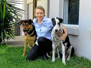 Blood from a best mate saved dying dog after roo attack