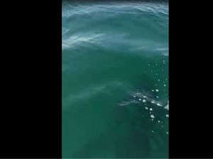 The moment a whale swims under SUP board