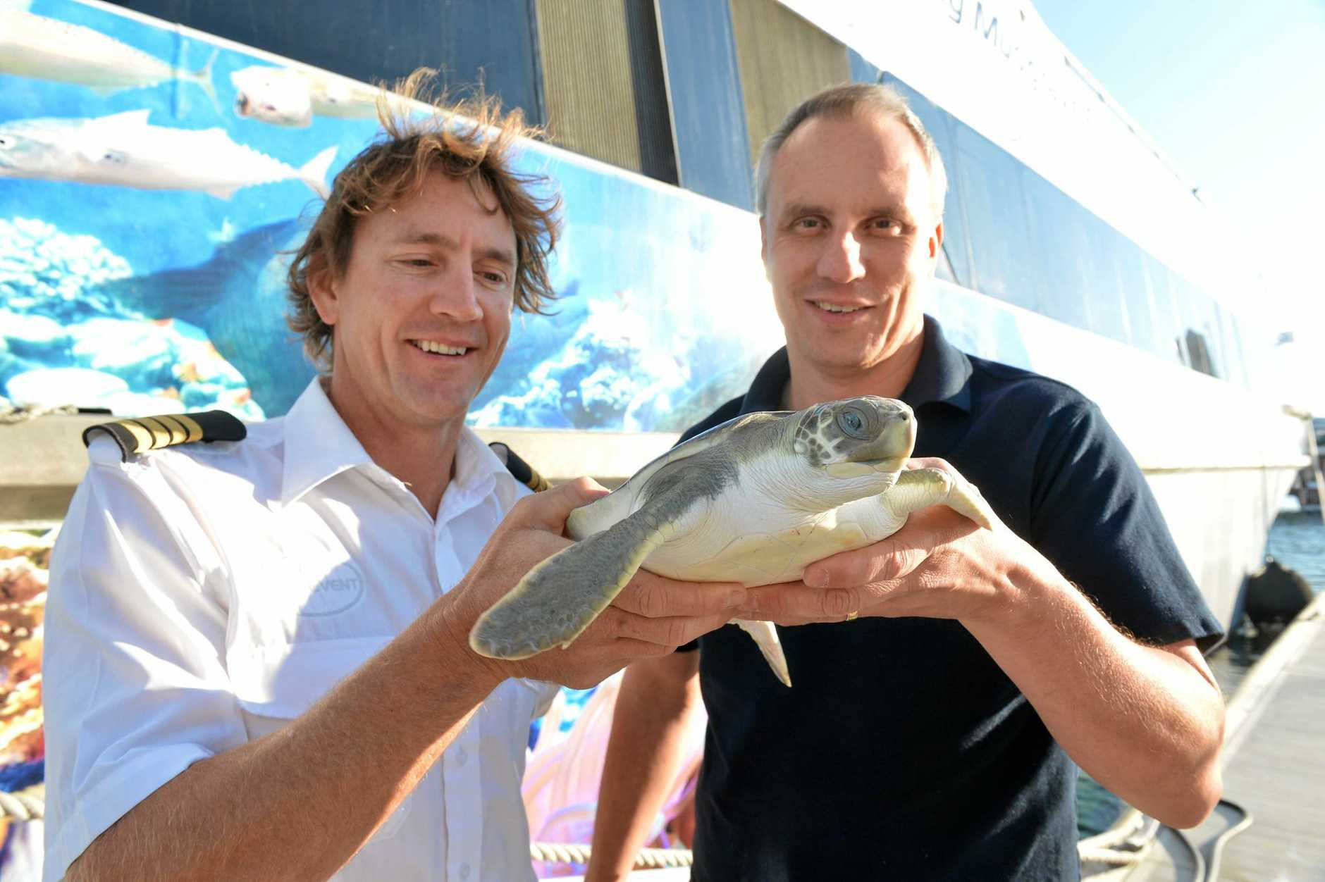 Brett Lakey and Aaron Sprowl get ready to release a juvenile flatback that was rescued sick and injured from waters near Sydney