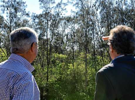Cr David Morrison and Cr Charlie Pisasale inspect the bat colony along Deebing Creek in Yamanto.