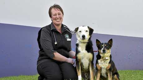 BEWARE OF TICKS: Checking Tilly and Tucker over for ticks is Greencross Vets South Toowoomba vet Dr Kara Brooker who has already seen many animals come in with ticks and is warning animal owners to be vigilant.
