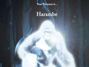 Harambe is not a patronus, sadly