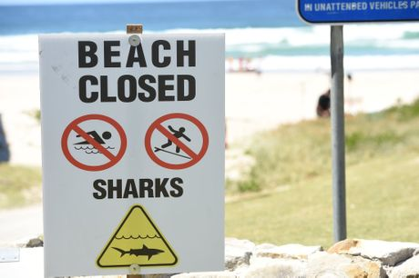 Multiple people attended the scene at Lighthouse Beach where a shark attack took place around 9:30 on Monday morning. Photo Marc Stapelberg / The Northern Star