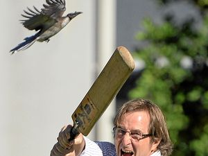 Swooping Friarbird no match for Virender Sehwag wannabe