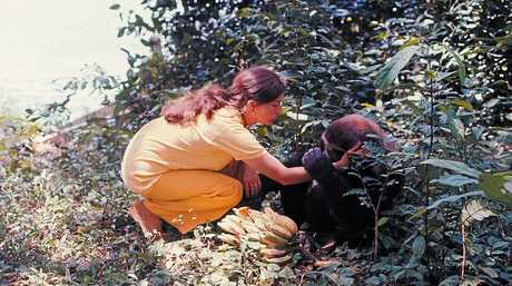 CONNECTION: Annette worked with gorillas in the African jungle for a year and wrote a book about her experience.