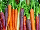 Get your Carrot Carnival Mix seeds with the paper today.