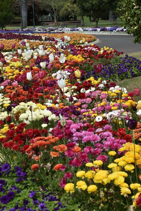 Queens Park. Spring. Flowers. September 2016