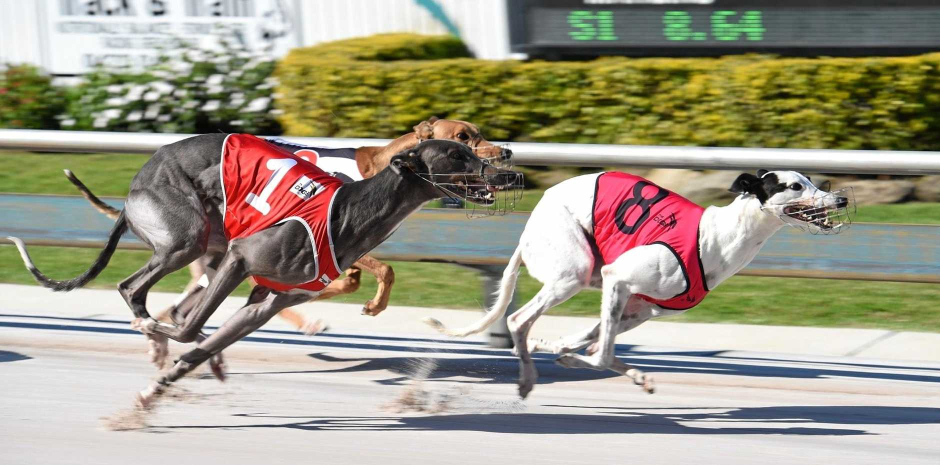 BAN REVERSAL: Coffs Harbour MP Andrew Fraser has called for the NSW Government to reverse its decision to ban greyhound racing.