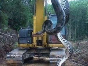 10.5m long snake found on construction site