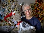 Decorations being sold in stores across the Coast. The Christmas Shack are already getting busy with people purchasing trees and decorations. Coralee Asker is gearing up for the festive season.