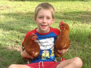 Southside family devastated after roaming dogs kill chooks
