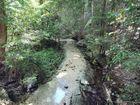 Fraser Island - Wanggoolba creek at Central Station.Photo: Alistair Brightman