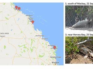 Four dugongs found dead in one week