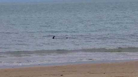 MYSTERY: Is it a shark, a dolphin or something else? An image captured in Urangan has caused mass debate on social media.