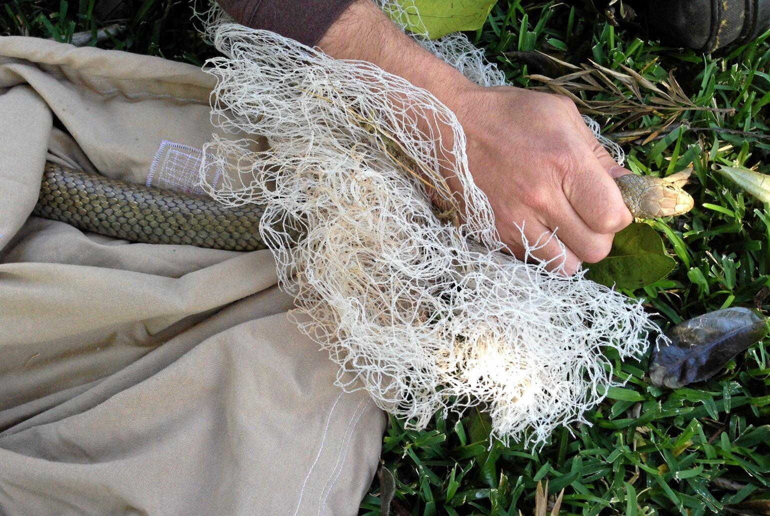 An Eastern Brown snake became entangled in this garden mesh netting and needed rescuing. Photo: Lib Ruytenberg