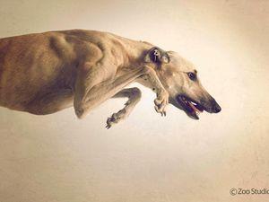 Greyhound Taskforce head tried to quit job