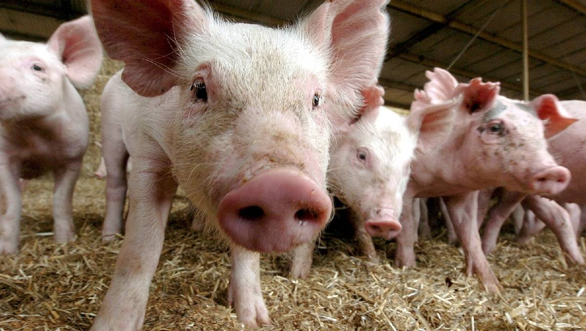 A piggery in Tabulam has been fined $15,000.