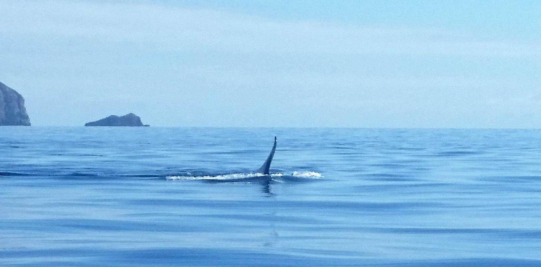Photographer Angela Mallinson took these photos of whales near the Keppel islands on Sunday phone as I was not prepared to see anything out there and we were definitly not getting too close to them.
