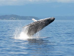 LISTEN: Recording of humpback whale song