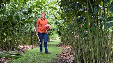 Lyn Palmer  has run Ventons Tropical Blooms with husband Jim and Chris Pitts for almost nine years.