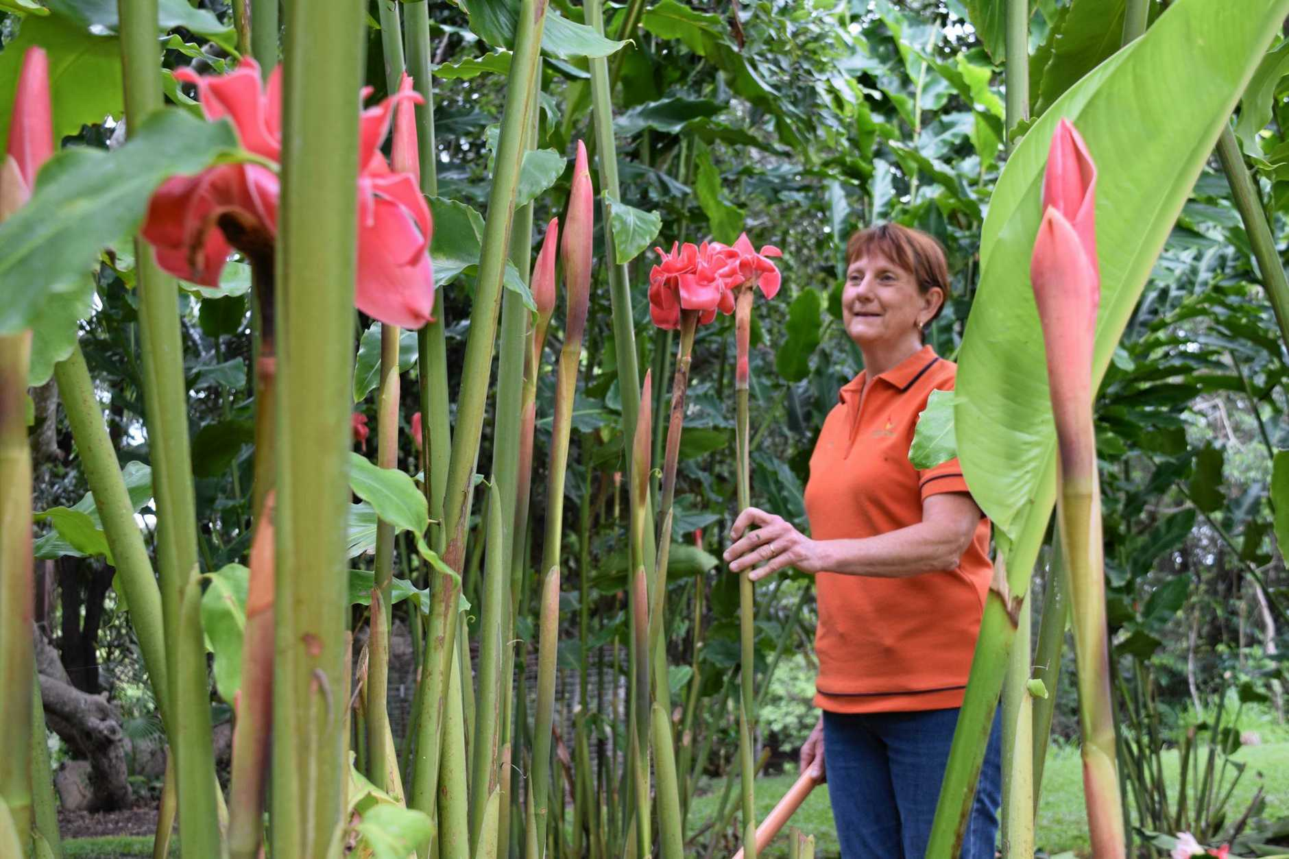 Lyn Palmer had wanted to be a commercial flower producer since visiting other farms near Mission Beach.