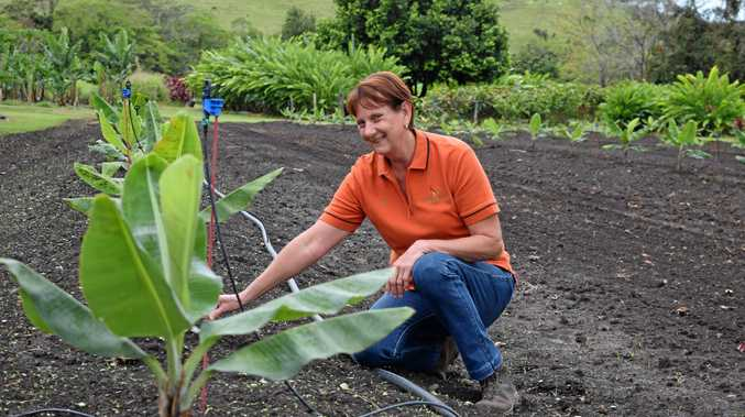 Lyn Palmer has just finished planting 300 banana trees.