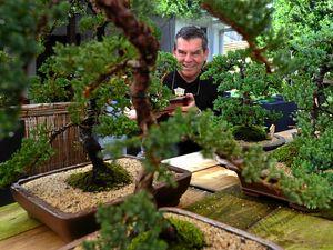 From bonsai, big things grow