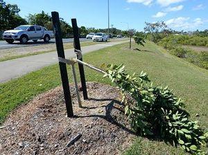 Vandals attack Scenic Highway trees