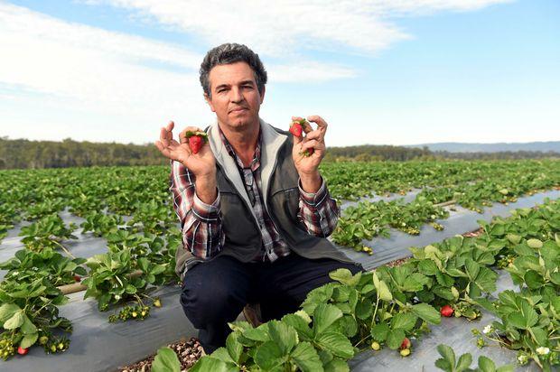HIGH COSTS: Strawberry Growers Association president Luigi Coco.