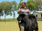 A rare Tibetan Mastiff took out best runner up in show with owner Lou Kelly from Sarina beaming with pride.