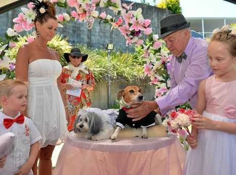 WHO LET THE DOGS OUT: A wedding was helded for two dogs, Skipper a seven year old Jack Russell and Minty a four year old Shitu at Kookaburra Village, Caloundra.