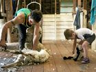 Jason Murray teaches four-year-old Jake Elms how to shear.