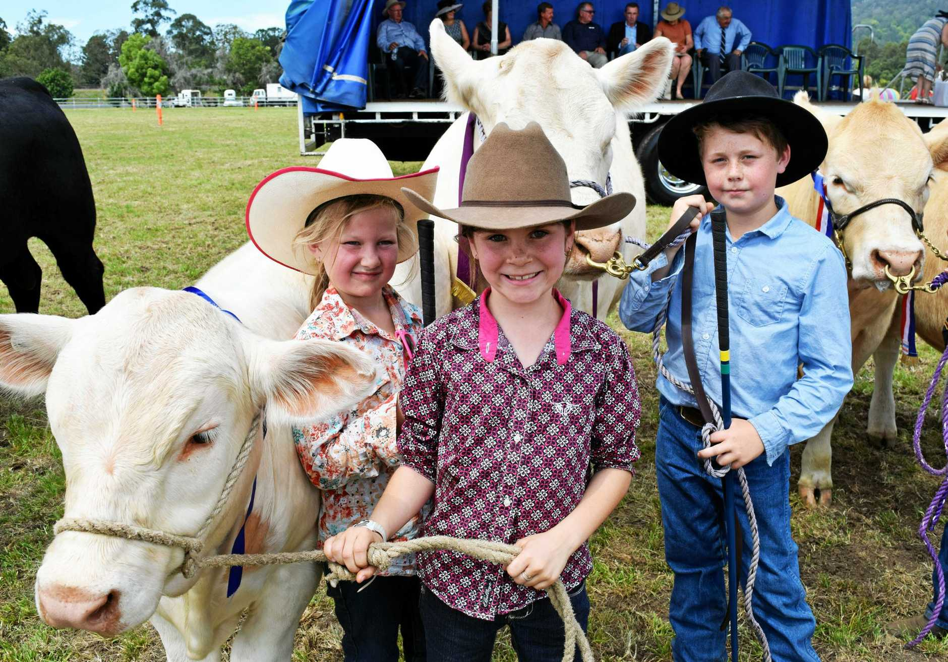 (left to right): Kate Disson, 8; Georgia Mulcahy, 8 and Bradley Disson, 10 with their champion cattle at the Kyogle Show.