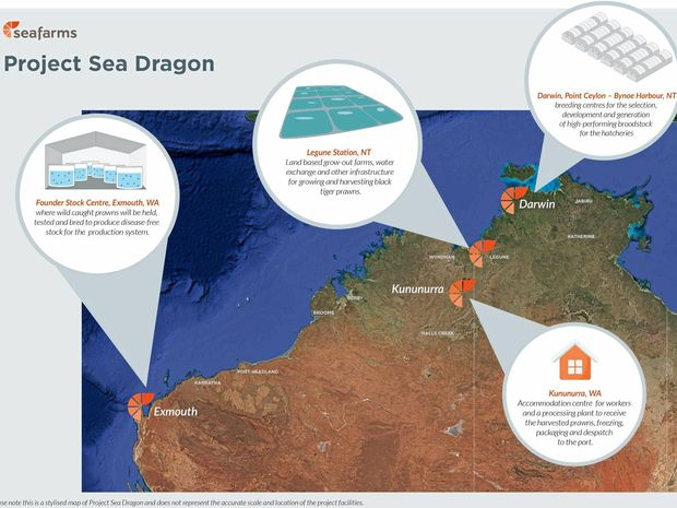 Project Sea Dragon will consist of four sites across both WA and the NT. At full production it will produce more than 100,000 tiger prawns yearly.