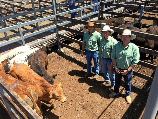 HAPPY SELLERS: Landmark Toowoomba auctioneers (from left) Craig Deacon, Simon Booth and Landmark Dalby's Andrew Costello with a pen of steers that sold for $9/kg on Monday at the Toowoomba saleyards.