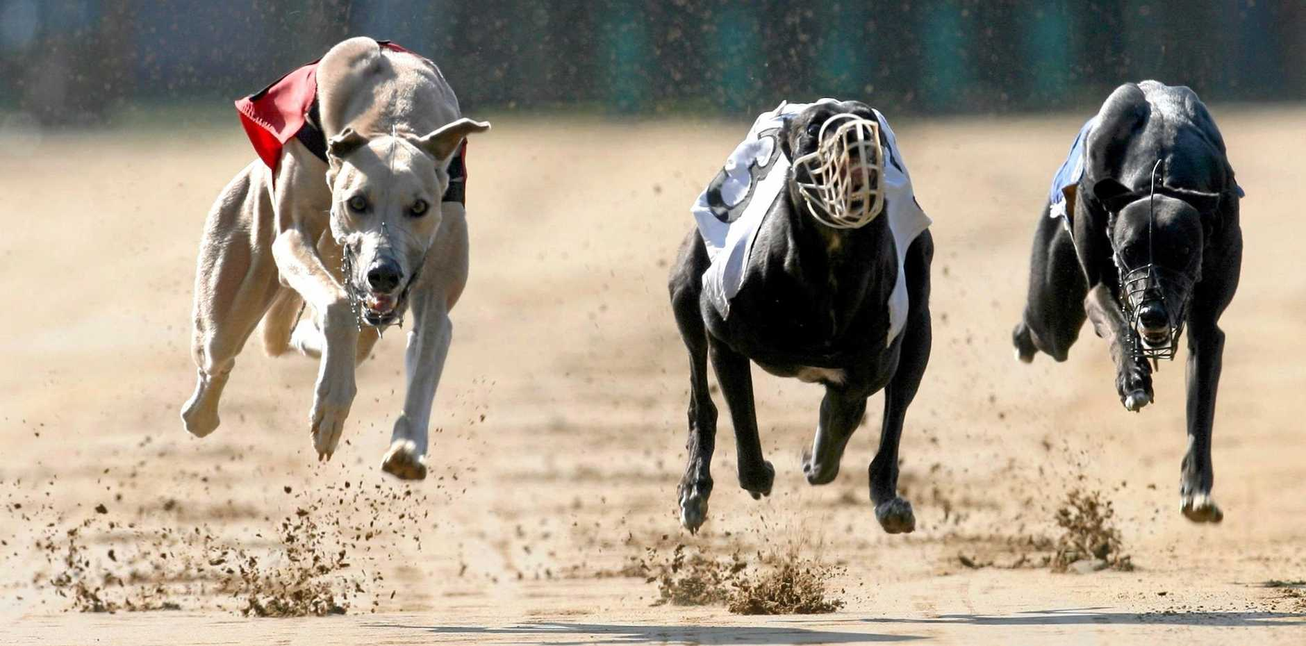 Mike Baird's greyhound racing ban has been cancelled.