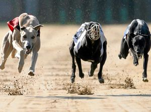 Local tracks expected to survive the greyhound sell-off