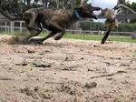 Baird hounded into dish-licker backflip
