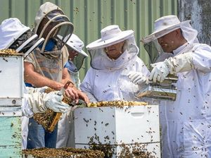 More than a hobby: Commercial beekeeper shares his passion