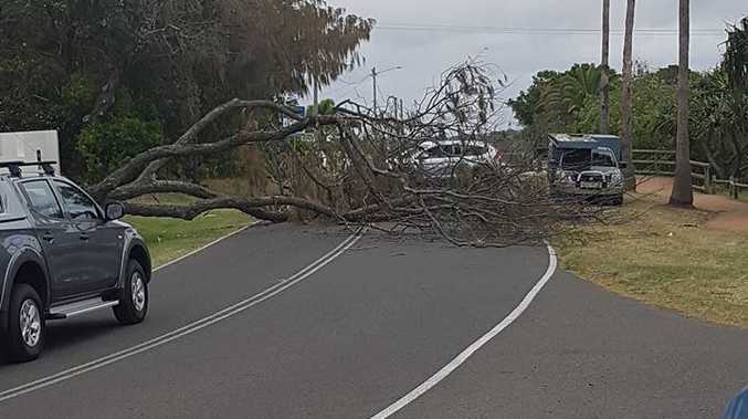 A tree falls across the causeway at Bargara. Photo: Sarah Spence.