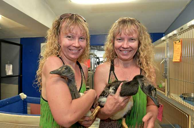 Paula and Bridgette Powers from the Twinnies Pelican and Seabird Rescue with young Magpie Geese.